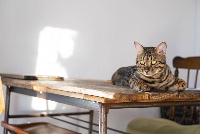 机の角を凝視する猫