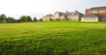 icatchsummer-grass