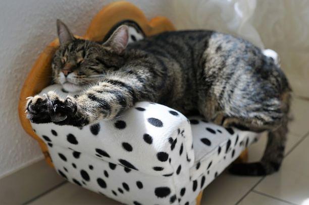 cat-2360863_640