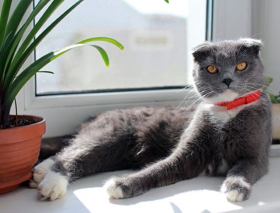 cat-2765665_640
