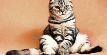 cat-2934720_640
